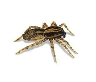 Dịch vụ diệt nhện