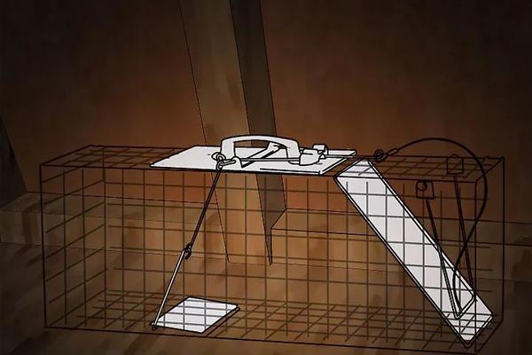 7 cách chống chuột vào nhà vô cùng lợi hại
