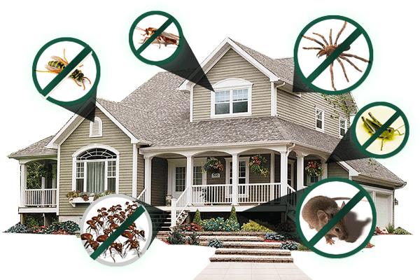 Các vấn đề và bệnh do côn trùng dịch hại gây ra
